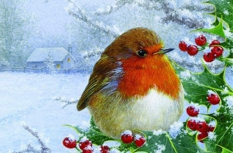Robin Amongst the Holly