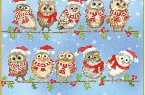Christmas Hoot